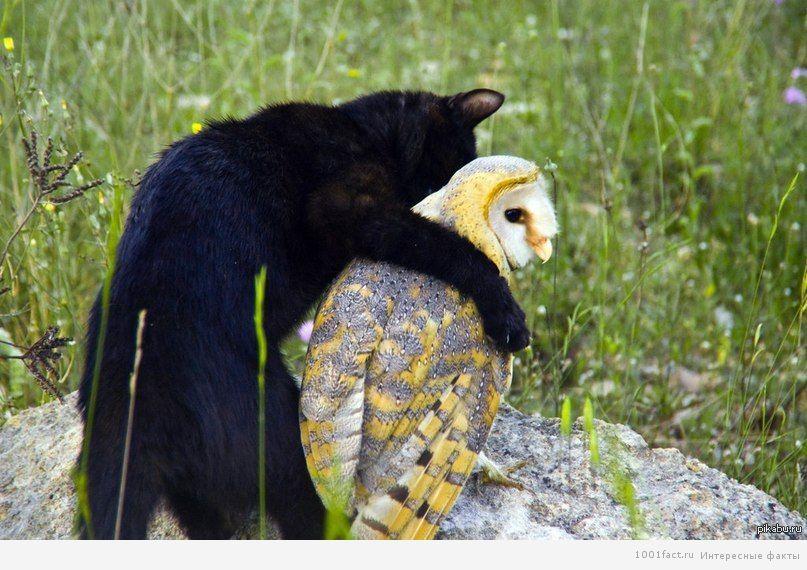 дружба с совой