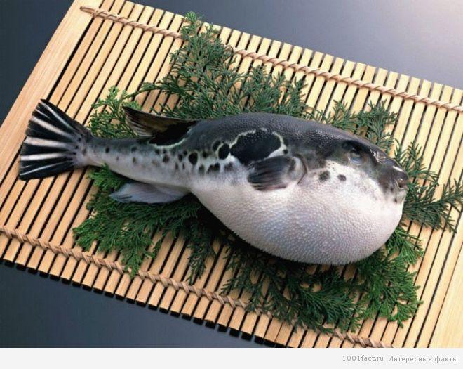опасная рыба-фугу