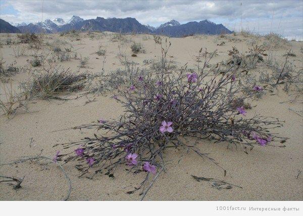 удивительная Чарская пустыня