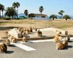 кролики на острове Окуносима