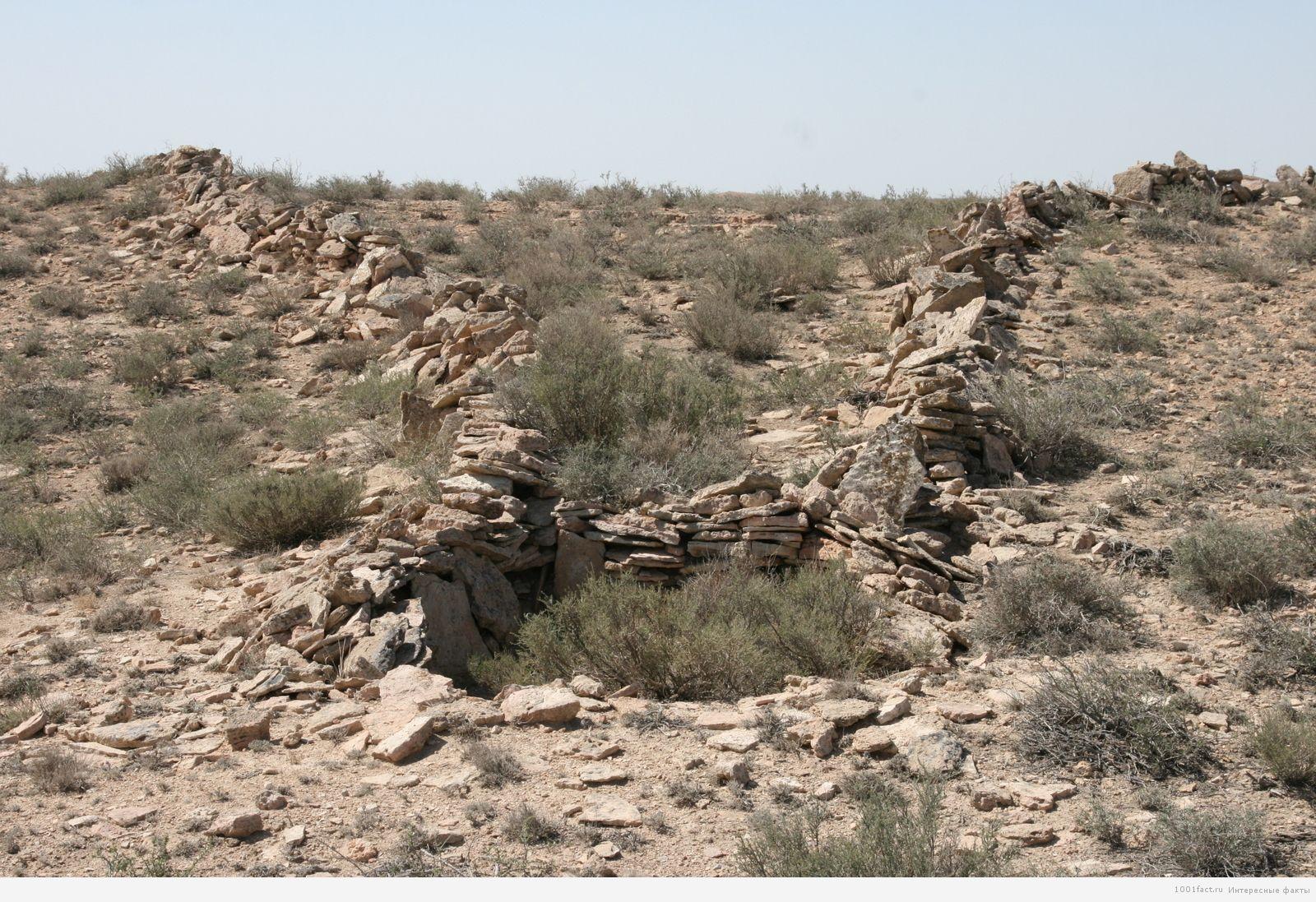 растения на плато