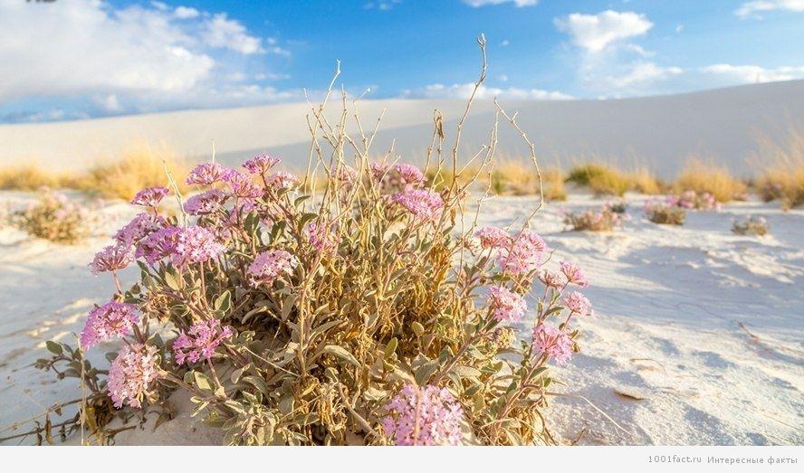 о пустыне