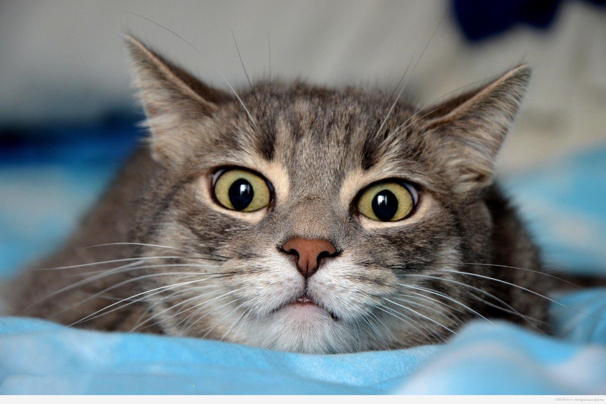 кошка испуг
