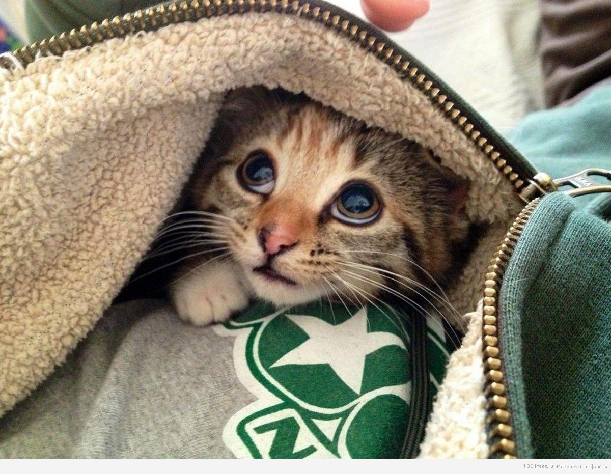страхи кошек