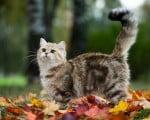 голос кошек