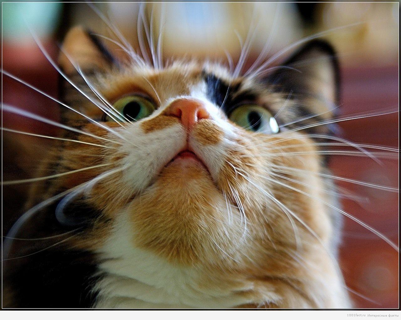 усы и брови кошек