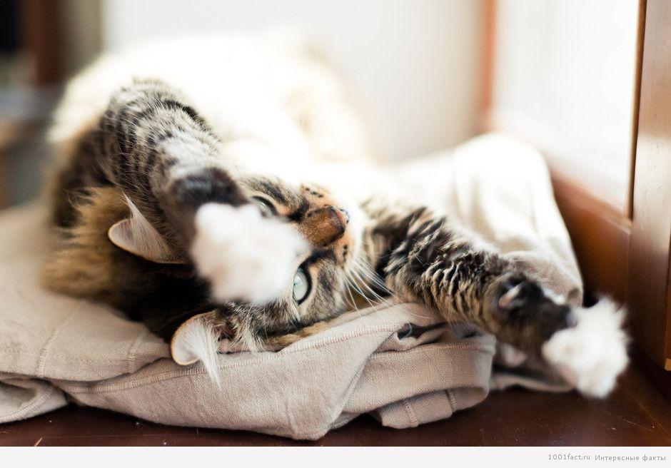 про кошек и их позы