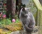 факты о телодвижениях кошек